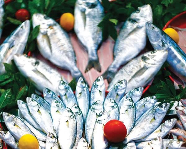 Samsun balıkçılık