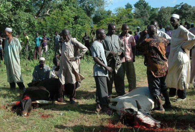 afrika-cad-kurban-organizasyonu